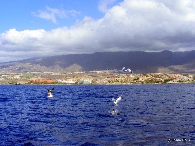 041 - Ioana Tenerife
