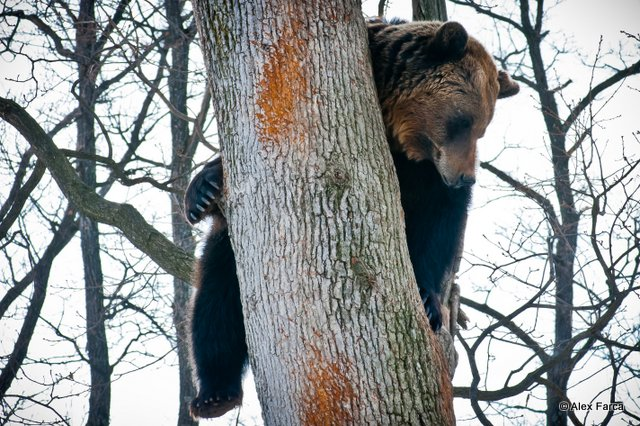Rezervatia de ursi de la Zarnesti.