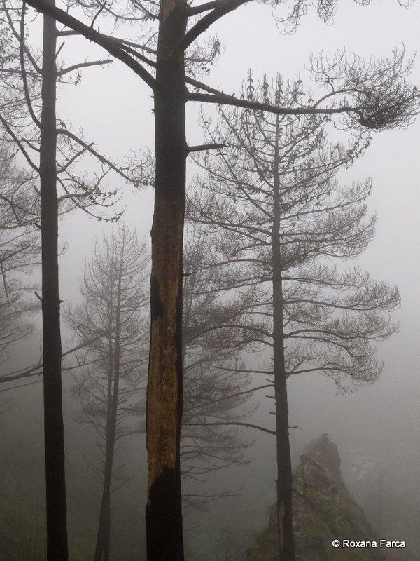 Madeira_2696