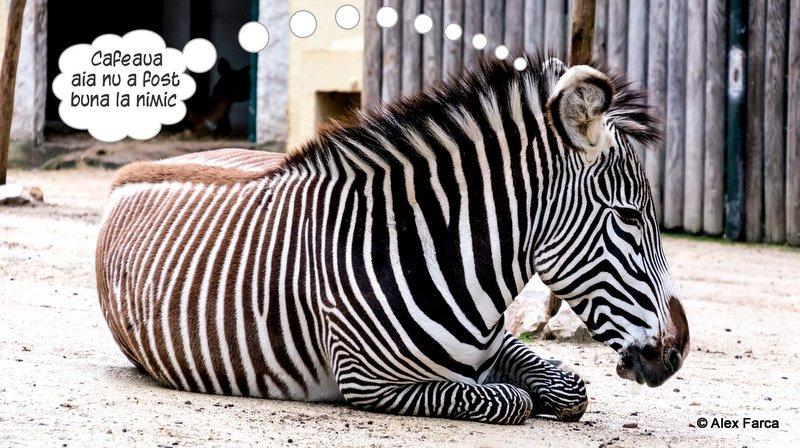 Lisabona_Zoo_ 10