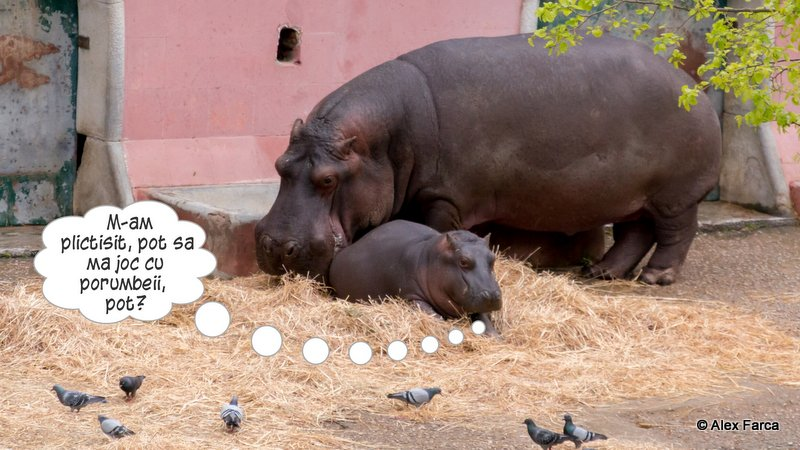 Lisabona_Zoo_ 3