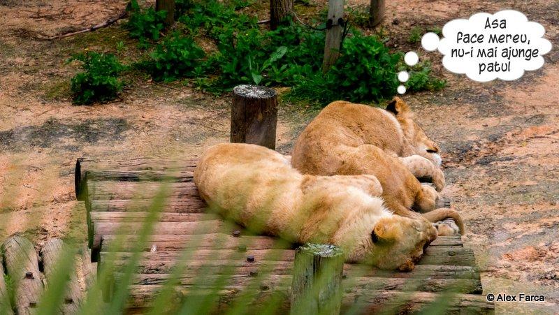 Lisabona_Zoo_02