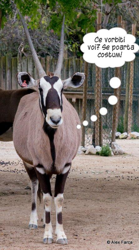 Lisabona_Zoo_05