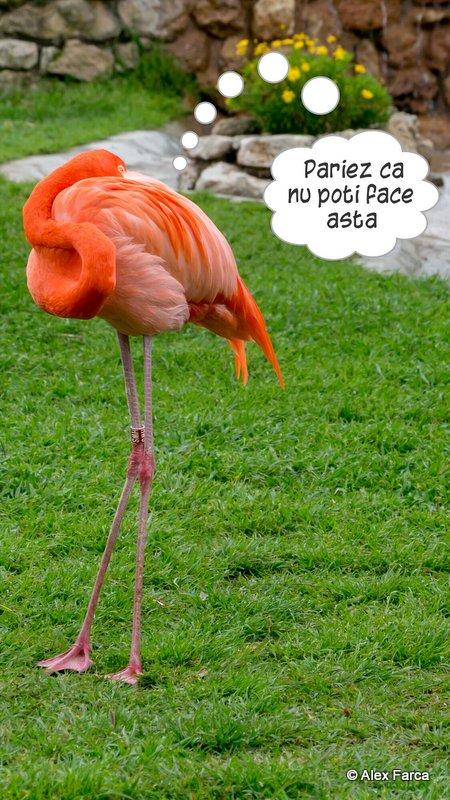 Lisabona_Zoo_06