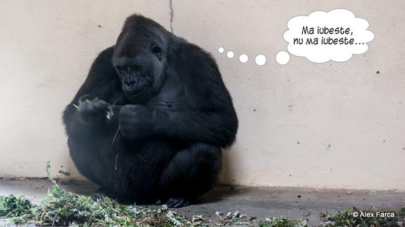 Lisabona_Zoo_07
