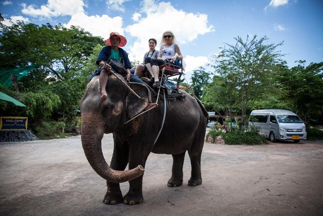 Calare pe elefant, trei cotofene