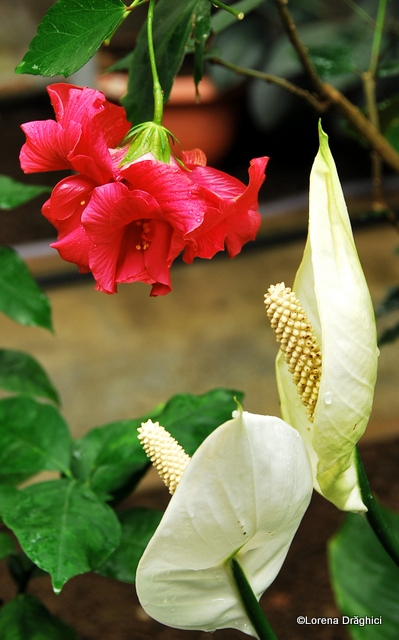 Gradina Botanica Jibou 4