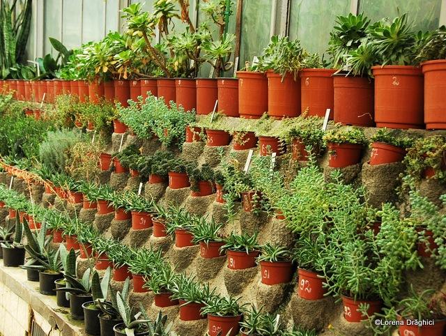 Gradina Botanica Jibou 7