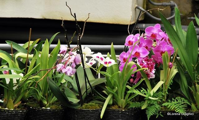 Gradina Botanica Jibou - orhidee 2