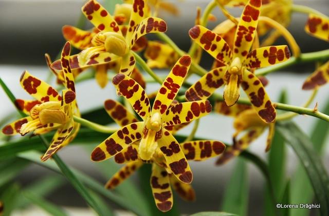 Gradina Botanica Jibou - orhidee 3