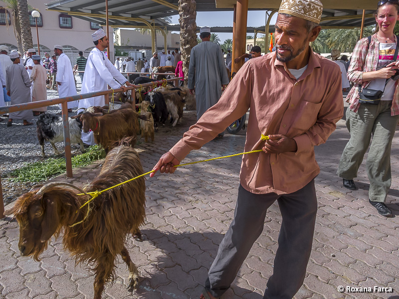 Oman_7812