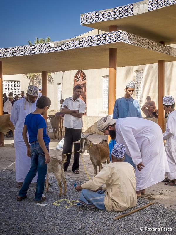 Oman_7823