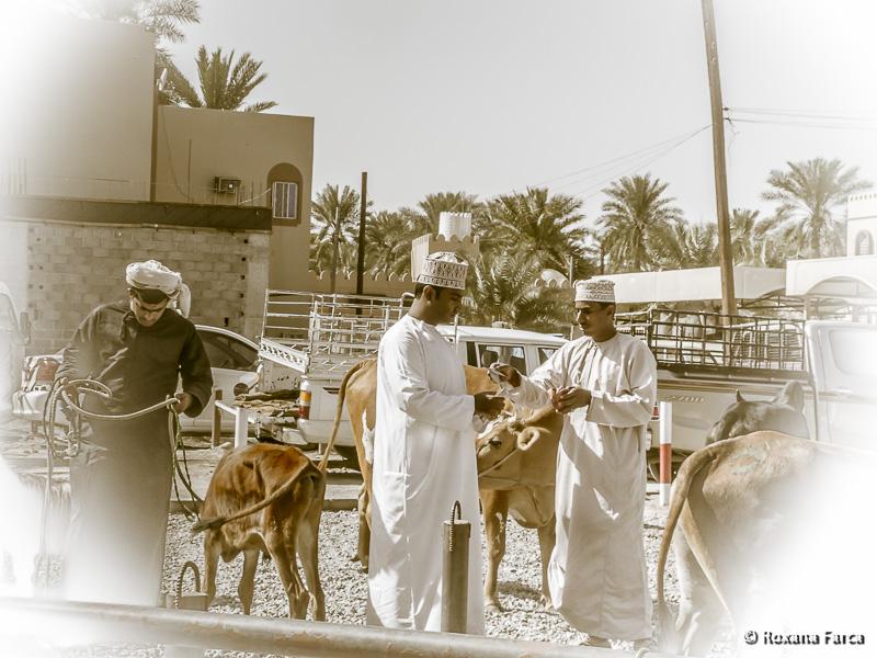 Oman_7827
