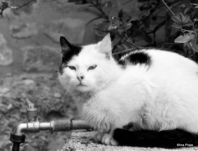 O pisica, nu stii niciodata cand iti e de folos.
