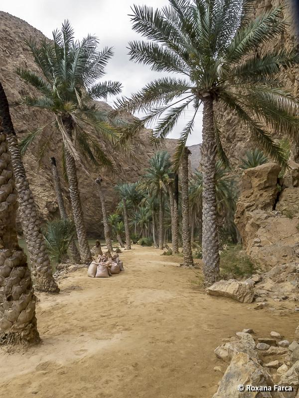 Oman_8503