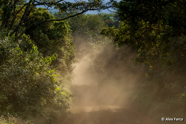 Tanzania_8675