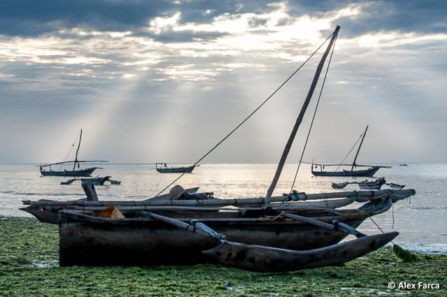 Zanzibar_7629