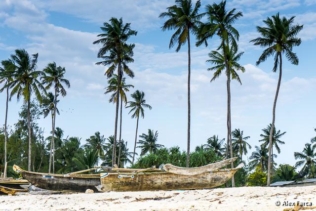 Zanzibar_S00364