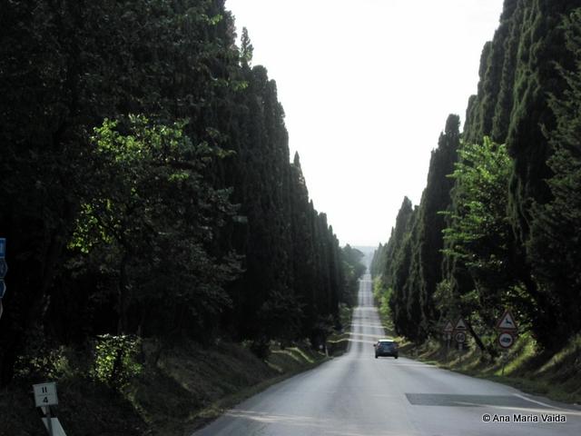 Bolgheri_4383