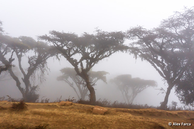 Ngorongoro01842