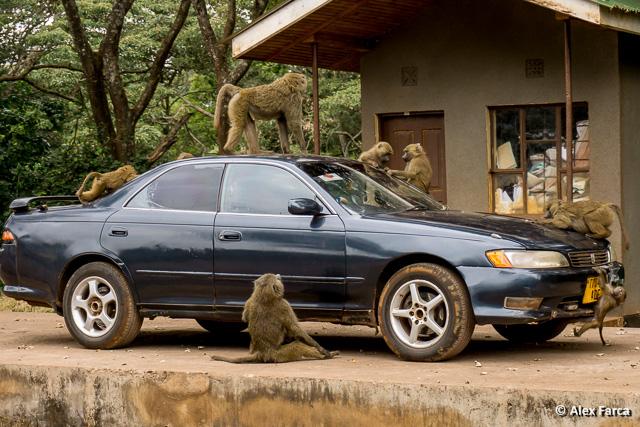 Ngorongoro02173