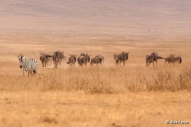 Ngorongoro_0707