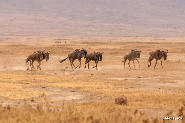 Ngorongoro_0715