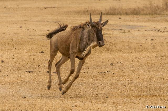 Ngorongoro_0787