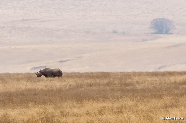 Ngorongoro_0863-2