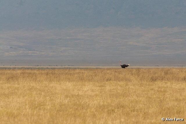 Ngorongoro_0870