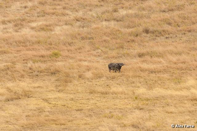 Ngorongoro_0888