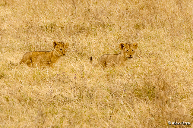 Ngorongoro_0954