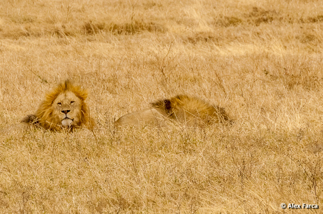 Ngorongoro_0966