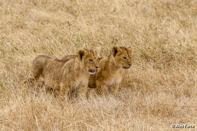 Ngorongoro_0971-2