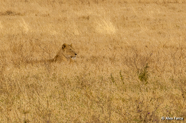 Ngorongoro_0999