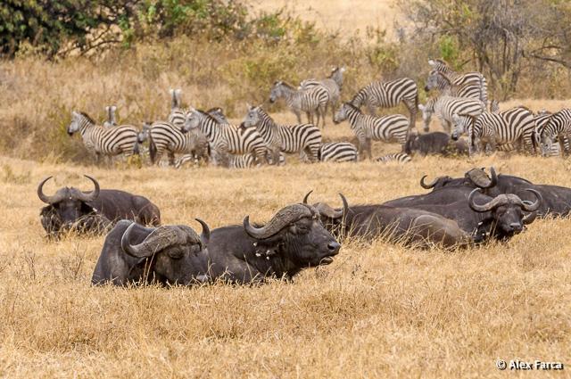 Ngorongoro_1037