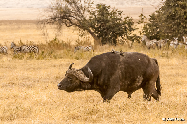 Ngorongoro_1044