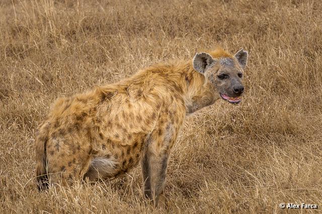Ngorongoro_1149-2