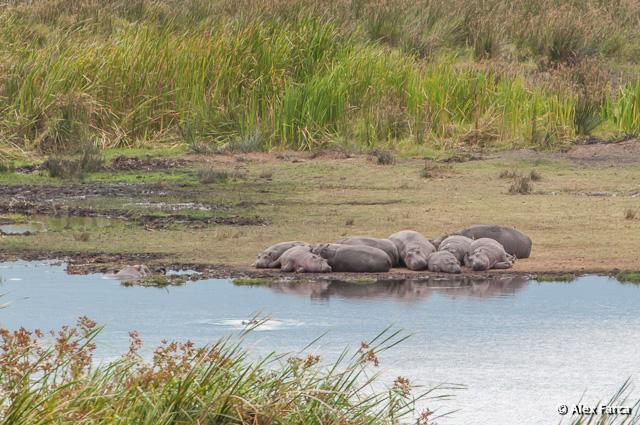 Ngorongoro_1189