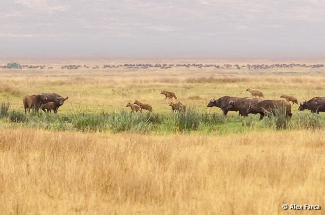 Ngorongoro_1308