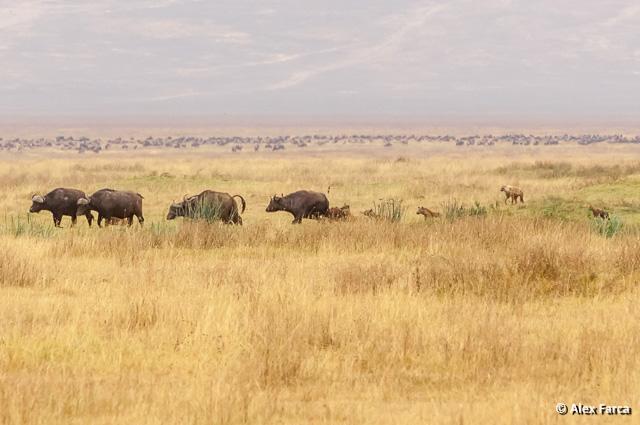 Ngorongoro_1322