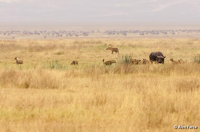 Ngorongoro_1354