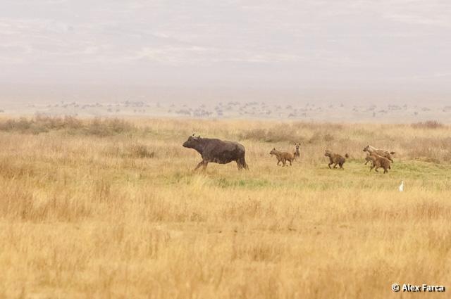 Ngorongoro_1372