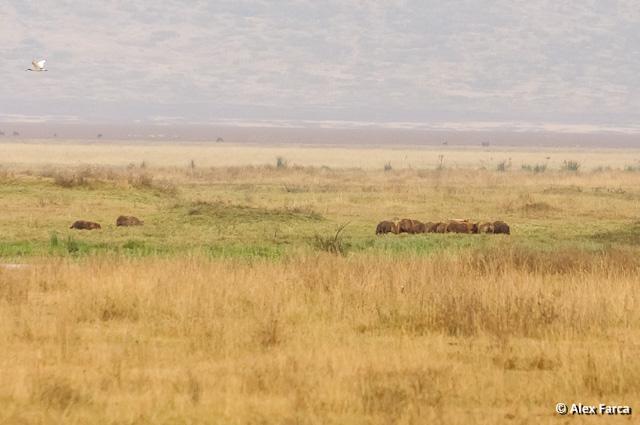 Ngorongoro_1398