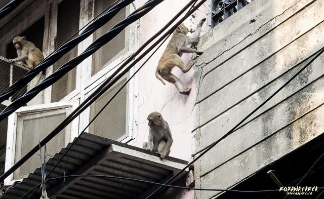 India_Delhi_0100