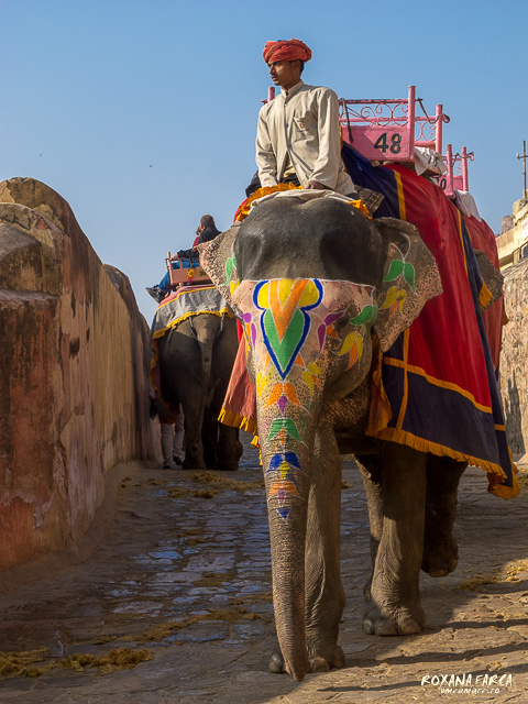 India Amer Fort_0481
