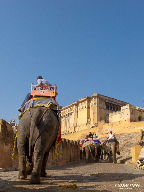 India Amer Fort_0482