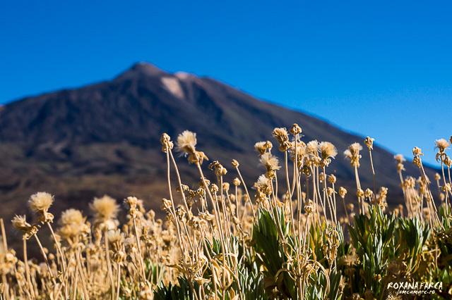 Teide, Tenerife