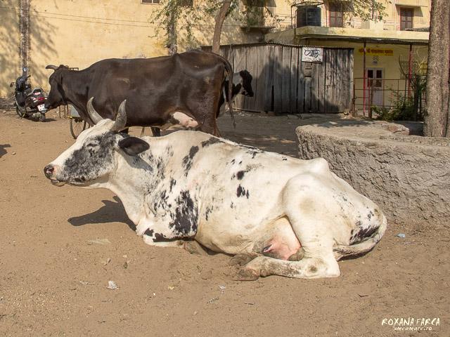 Jaipur_0644