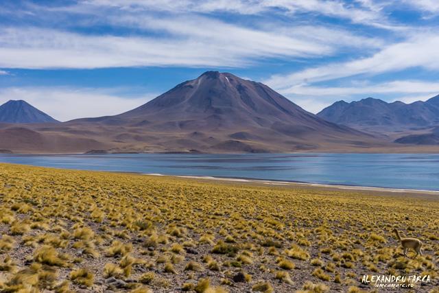 Atacama-02020